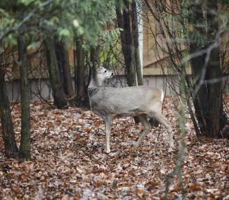 Tak leczą dzikie zwierzęta w Łodzi