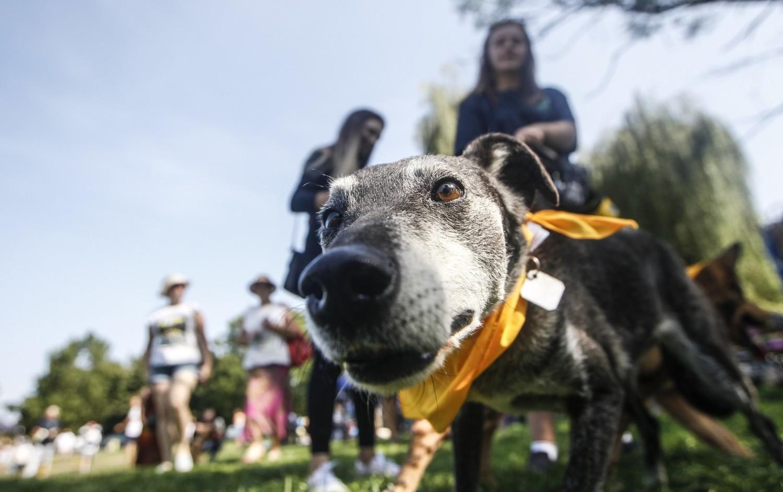 Pomoc wielka dla Kundelka - pod takim hasłem na rzeszowskich bulwarach odbył się w niedzielę piknik charytatywny dla psiaków ze schroniska