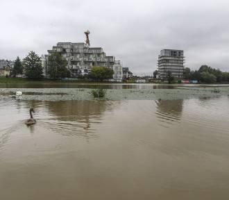 Przez intensywne opady deszczu rośnie poziom Wisłoka w Rzeszowie. Zobacz zdjęcia