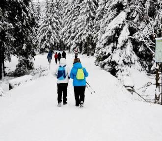 Jakuszyce: nie niszcz tras narciarzom! Apel, warunki i najbliższe zawody- sprawdź! [GALERIA]