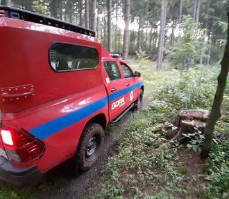 Kilka godzin szukali desperata w lesie. Profiler z Wałbrzycha uratował mu życie...