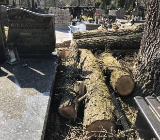 Podczas wycinki drzew na cmentarzu spadł dąb i uszkodził kilkanaście grobów