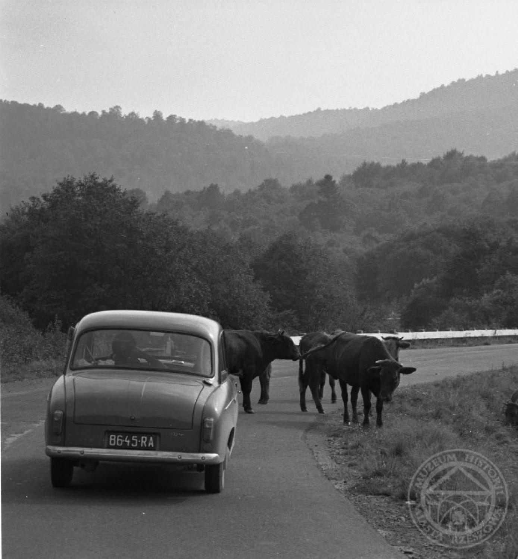 Więcej unikatowych fotografii i bardzo ciekawą dawkę wiedzy z przeszłości regionu znajdziesz na profilu Muzeum Historii Miasta Rzeszowa na Facebooku Kliknij TUTAJ