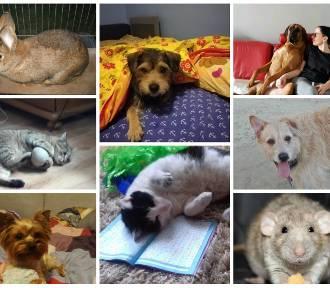 Światowy Dzień Zwierząt [ZDJĘCIA PUPILI] Życie ze zwierzętami u boku jest fajniejsze!