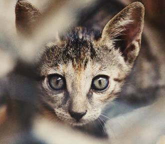 QUIZ. Uwielbiasz koty? A znasz ich tajemnice?
