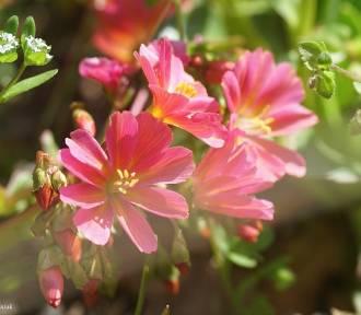 Piękne wiosenne akcenty w Ogrodzie Botanicznym