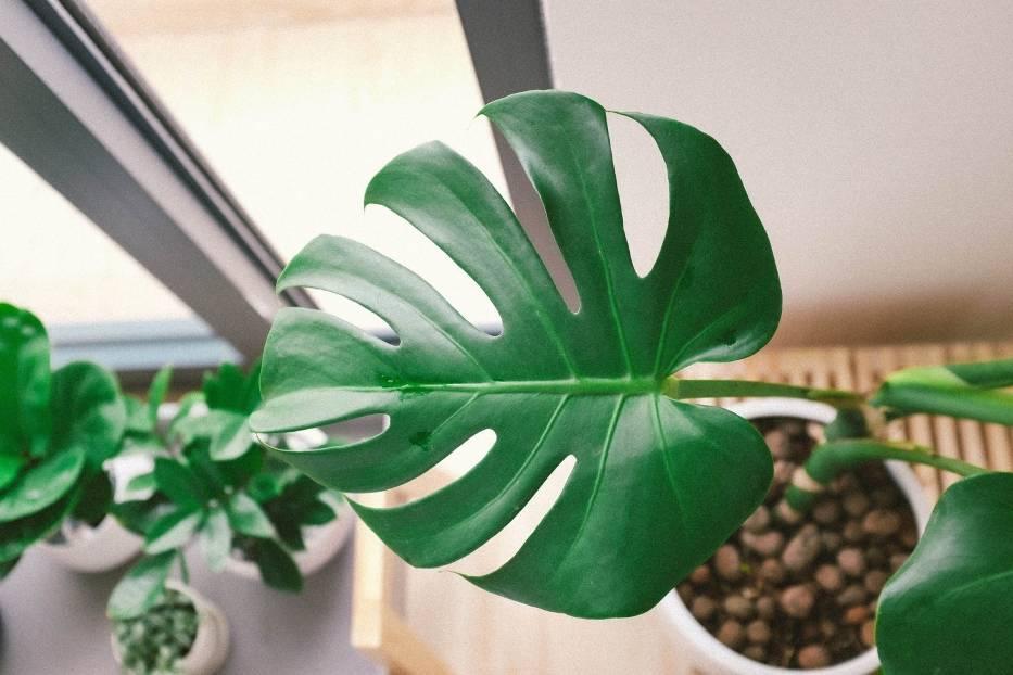 Zadbaj o rośliny domowe