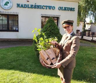 Rozdają sadzonki drzew pod Nadleśnictwem w Olkuszu