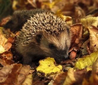 Pogoda na wrzesień: jesień zacznie się łagodnie?