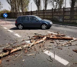 UWAGA! Silny wiatr w Toruniu. Ponad 20 zgłoszeń dotyczących drzew