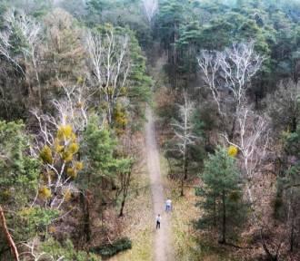 Dodatkowy Półmaraton  Złota Góra w dniu 16 sierpnia