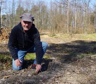 Święto Drzewa 2021. Powstaną ogrody dla wiewiórek, nietoperzy, ptaków i zapylaczy