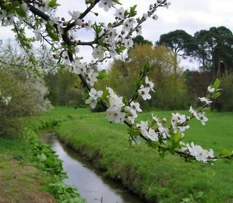Piękno wiosny nad Kanałem Bydgoskim [zdjęcia, wideo]