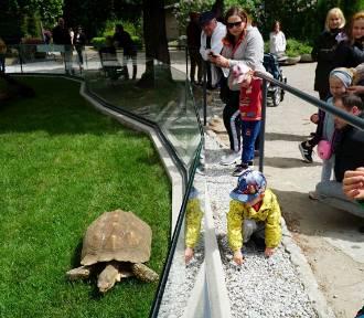 W Starym Zoo otwarto domek dla żółwi. Zobacz, jak wygląda