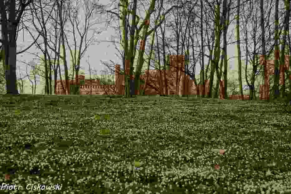 Foto powiat pucki: rowerowa wycieczka do Rzucewa. Tata i syn odwiedzili Osadę Łowców Fok i zamek w Rzucewie