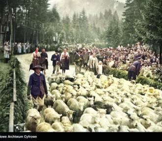 Podhale. Zobaczcie jak wyglądał kiedyś wypas owiec w Tatrach i jesienny redyk