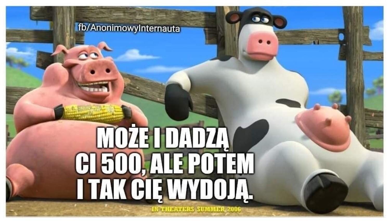 Krowa Plus i Świnia Plus