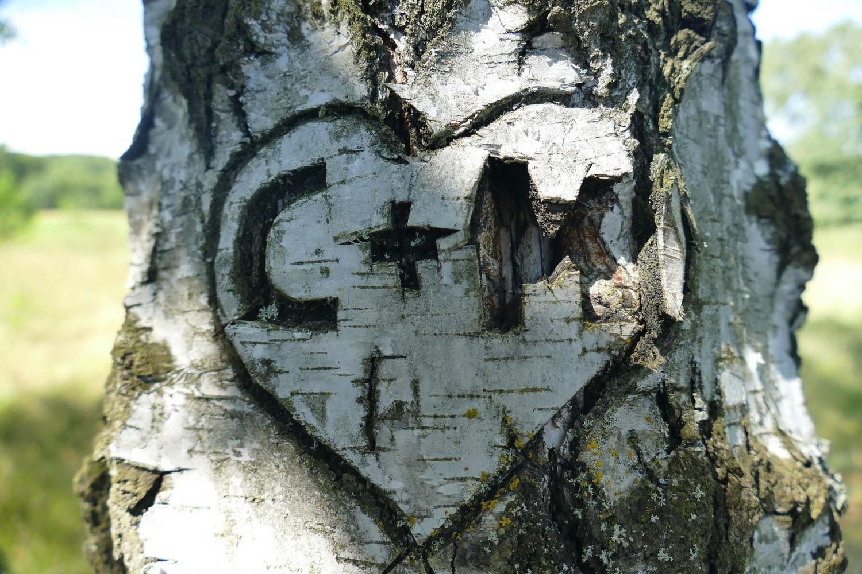 <center>Napisy wyryte w drzewach</center>