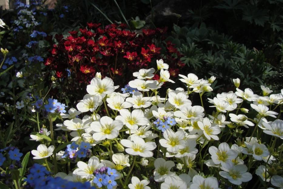 Są rośliny, które lubią lekki cień i będą dobrze rosły na skalniaku