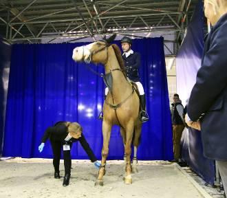 Cavaliada 2018 w Lublinie. Wielkie święto jeździectwa za nami (ZDJĘCIA)