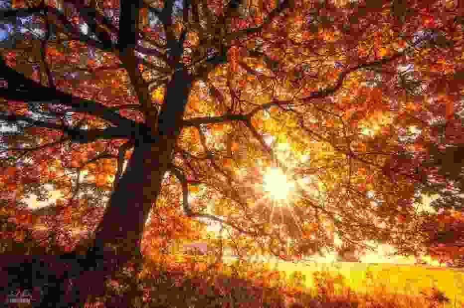Magiczny jesienny las