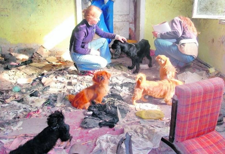 Warunki, w jakich były trzymane psy, przeraziły nawet ekologów
