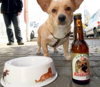 Kup piwo dla zwierzaka. W tych lokalach wypijesz piwo, wspomagając zwierzęta