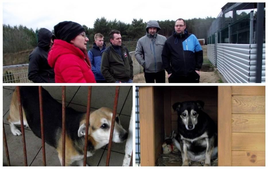 Stowarzyszenie Patriotyczny Zbąszyń, z darami w schronisku dla zwierząt w Nowym Dworze
