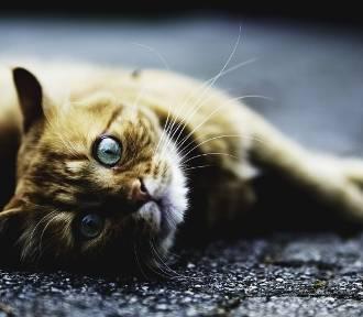 Jastrzębie: kotek wpadł do  studzienki kanalizacyjnej i utknął na głębokości 6 metrów. Przeraźliwie