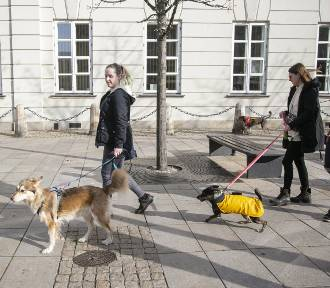 Mieszkańcy apelują o wybiegi dla psów. Władze miasta ich usłyszą?