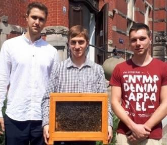 Studenci PG opracowali urządzenie chroniące pszczoły