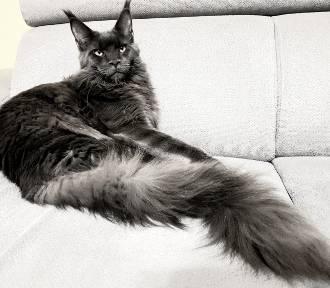 Pupil Roku 2020. Mieszkańcy pochwalili się swoimi kotami. Który trafi do kalendarza? [ZDJĘCIA]
