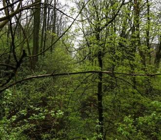 Kraków. Szykuje się wycinka drzew na terenie fortu Batowice. Mieszkańcy oburzeni