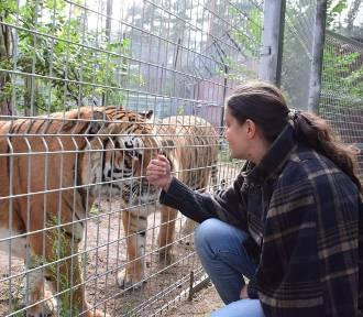 Dyrektor zoo: Zasikana zostałam od stóp do głów