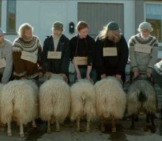 """""""SACROFILM"""" w zamojskim CKF """"Stylowy"""". Dzisiaj """"Erratum"""" i """"Barany. Islandzka opowieść""""! (ZDJĘCIA)"""