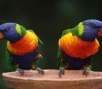 Zwierzęta wystawione na sprzedaż w Szamotułach. Koty, psy, papugi i....?