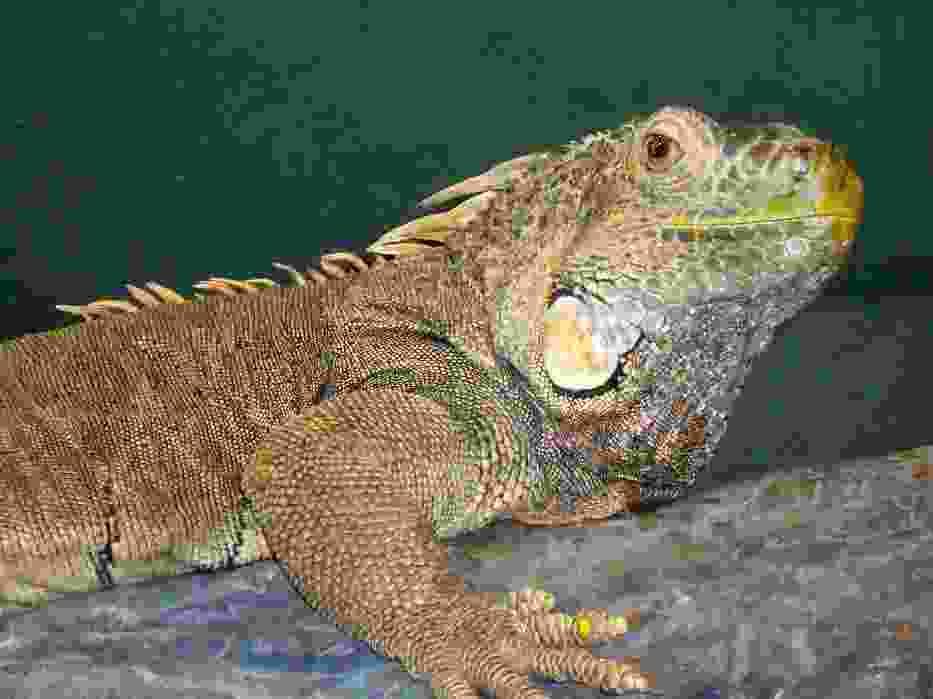 Kartka świąteczna ze zwierzęciem z zamojskiego zoo