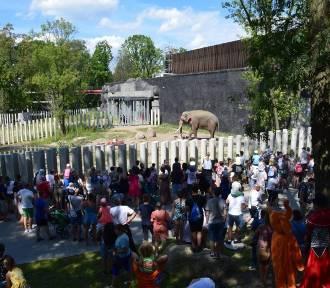 Dzień Słonia w Łodzi. Łodzianie mogli oglądać Aleksandra z nowego tarasu widokowego