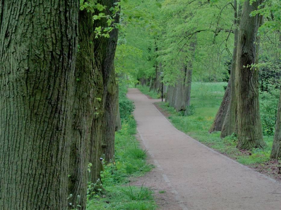 Gołuchowski park wiosennie. Zobacz, jak pięknie się prezentuje