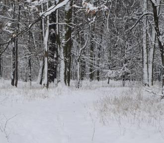 Zima zagościła na Śląsku. IMGW ostrzega przed silnymi mrozami