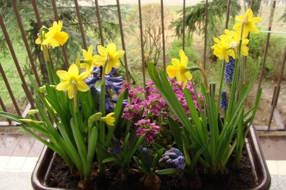 Jakie kwiaty sadzić na balkonie? Już możecie stworzyć kolorowy klimat! [ZDJĘCIA]