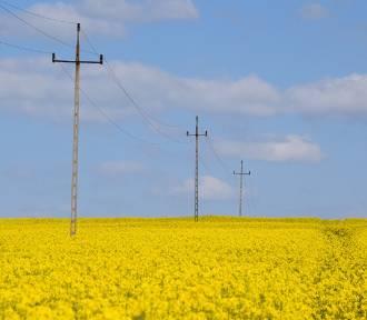 Piękne pola rzepaku na Śląsku. Tutaj można się zachwycić!