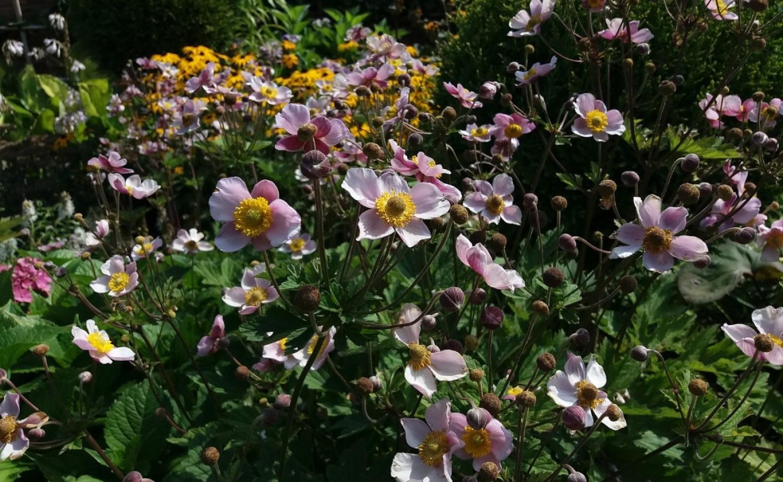 Większość roślin lubi lekko kwaśną ziemię