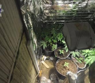 Chodel: 27-latek hodował marihuanę pod ziemią