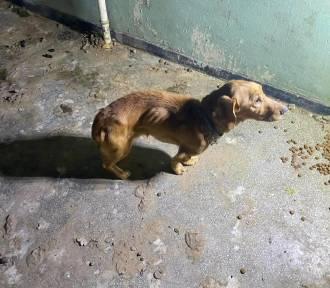 Psy zagłodzone przez miłośników zwierząt w Głuszycy? Kontrola w świdnickim schronisku [AKTUALIZACJA]