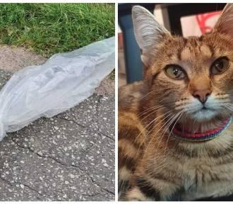 Wyrzucił z samochodu karmiącą kotkę. W foliowym worku zawiązanym drutem
