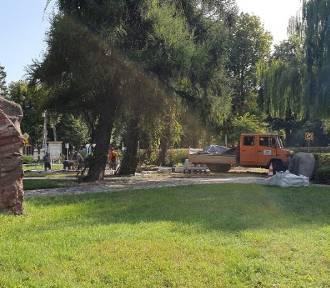 W sobotę w Parku Kaszubskim będą sadzić krokusy, żonklie i tulipany. Pomożesz?