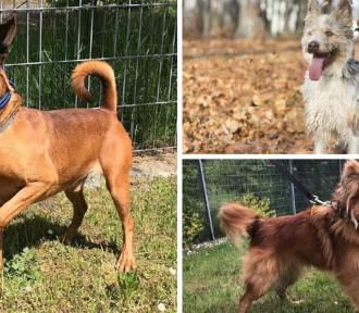 Cudowne psy czekają na adopcję w schronisku dla zwierząt. Zobacz ZDJĘCIA