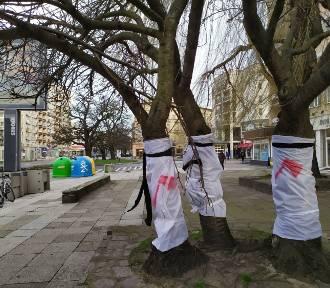 """Co z wycinką na al. Wojska Polskiego? """"Brońmy drzew, ale ze zdrowym rozsądkiem"""""""