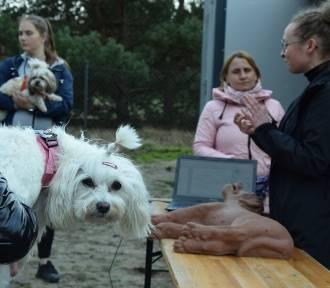 Jak ratować psa lub kota? W Książu Śląskim odbył się pokaz pomocy czworonogom